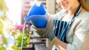 Danni causati da piante e fioriere nel condominio: come richiedere il risarcimento